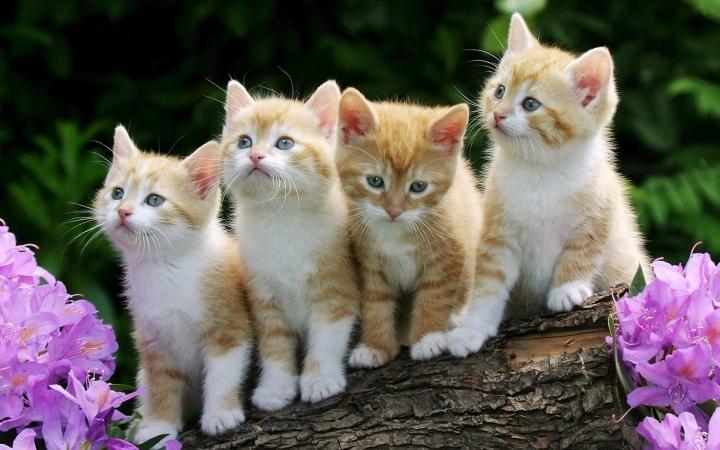 4_Cute_Cats_Wallpaper_1440x900_wallpaperhere